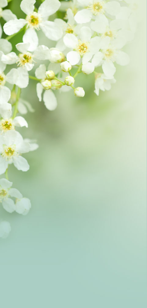 Artistic photo of small white flowers fading into pastel colors