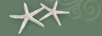 starfish background in header
