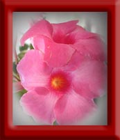 image of a pink flower with a grey blurry vignette border effect framed in red